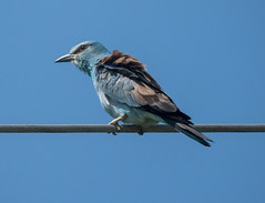 Roller on wire