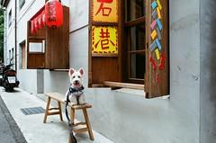 迪化街 (17) (紅色小草) Tags: 迪化街 nikonf3hp 28mmf20 fujifilm400
