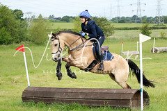 _MG_5689 (VickiClarkePhotography) Tags: canoneos70d horses nathudson mini mattingley hook xc cross country jumping eventing tamron 70200mm palomino buckskin dun