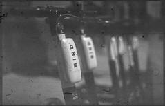 KonicaAutoreflex_Kodak2468_D76Stock_6_30510 (Michael Bartosek) Tags: kodak2468 2468 orthochromatic film 35mmfilm 35mm sprocketless kodak konicaautoreflext3 knoica 50mmlens hollywood california d76stock kodakd76