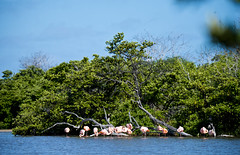 Galápagos Adventures (Simon Caunt) Tags: flamingos galapagosarchipelago galapagosmarinereserve galapagos gadventures galápagos nikond800 nikoncameras nikon nikondslr d800 240700mmf28nikkor afsnikkor2470mmf28 unesco unescoworldheritage southamerica equador nature naturalworld ©simon caunt