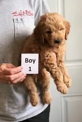 Bailey Boy 1 4-13