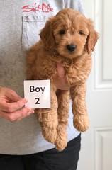 Bailey Boy 2 4-13