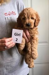 Bailey Girl 2 4-13
