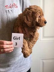 Bailey Girl 3 4-13