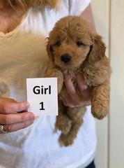 Bailey Girl 1 4-6
