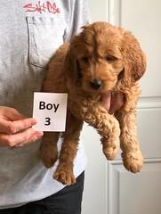Bailey Boy 3 4-13