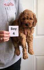 Bailey Boy 4 4-13