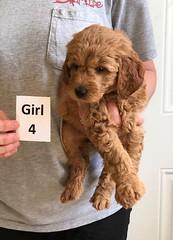 Bailey Girl 4 4-13