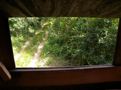 20190610_Stronegg_A_017 (Tauralbus) Tags: stronegg niederösterreich loweraustria wald forest hcohstand