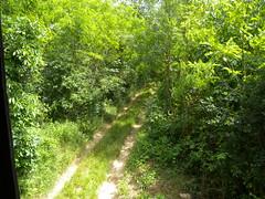 20190610_Stronegg_A_016 (Tauralbus) Tags: stronegg niederösterreich loweraustria wald forest hcohstand