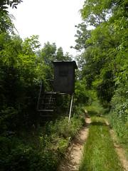 20190610_Stronegg_A_005 (Tauralbus) Tags: stronegg niederösterreich loweraustria wald forest hcohstand