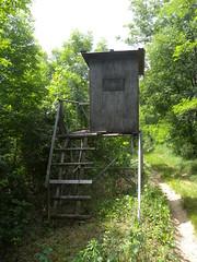 20190610_Stronegg_A_004 (Tauralbus) Tags: stronegg niederösterreich loweraustria wald forest hcohstand