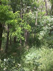 20190610_Stronegg_Ai_010 (Tauralbus) Tags: stronegg niederösterreich loweraustria wald forest