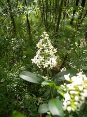 20190610_Stronegg_A_010 (Tauralbus) Tags: stronegg niederösterreich loweraustria wald forest