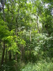 20190610_Stronegg_A_007 (Tauralbus) Tags: stronegg niederösterreich loweraustria wald forest