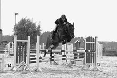 Spring! (gabriele.bozzi) Tags: horses spring bw sport skillfulness horseriding