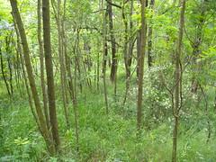 20190610_Stronegg_A_021 (Tauralbus) Tags: stronegg niederösterreich loweraustria wald forest