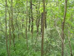 20190610_Stronegg_A_020 (Tauralbus) Tags: stronegg niederösterreich loweraustria wald forest