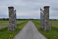 le domaine a bella a saint andré de kamouraska (2) (Boriton42) Tags: cormoran