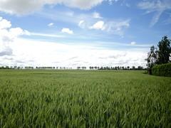 Paysage de la Brie (andrébordas) Tags: ciel nuage champ arbre nature paysage