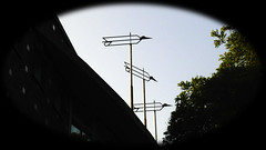 gwb | birds (stoha) Tags: birds bird vogel voegel uccello gwb guesswhereberlin berlin berlino germania germany deutschland soh stoha schlüterstrase schlüterstr charlottenburg berlincharlottenburg citywest guessedberlin gwbgerdmittelberg gwbgmfdk