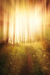 10th June 2019 (Rob Sutherland) Tags: light burst tree wood forest sun path undergrowth concept uplifting nature uk england english cumbria cumbrian britain british holy god glory religion religious inspiration shine shining brilliance brilliant