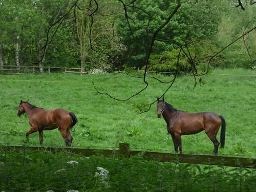 Wollerton Old Hall Garden - The Croft - horses