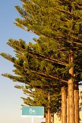 In Line (.Stephen..Brennan.) Tags: trees pentax australia perth fremantle westernaustralia fa77 pentaxk3