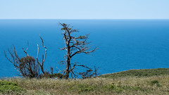 Kite at the Top of a Tree (lennycarl08) Tags: pointreyesnationalseashore northerncalifornia