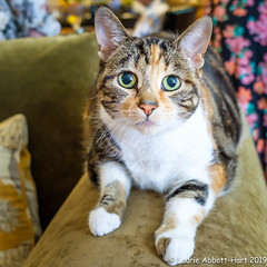 20190609She's a Good Girl28267-Edit (Laurie2123) Tags: laurieabbotthartphotography laurieturnerphotography laurietakespics odc odc2019 ourdailychallenge cat fujixt2 fujinon1855mm