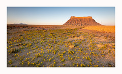 Badlands in Bloom (www.halkaphoto.com) Tags: usa americansouthwest utah badlands caineville factorybutte spring bloom desert desertplants arid flowers sunrise morning
