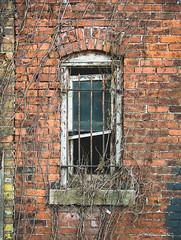"""Canton Laundry Window"" (D A Baker) Tags: window fortwayne indiana canton laundry disrepair bars brick ivy orange decay"