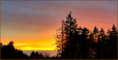 Silhouetted Firs (robinb44) Tags: silhouette silhouettes douglasfirtrees fir trees sunset nanaimo bc canada