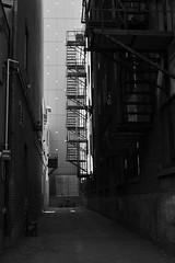 P6100031 (jlborja66) Tags: jaimeborja streetphotography montreal olympus olympuscamera em10mkii mzuiko25mmf18