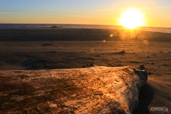 Driftwood on the beach (J0nnyM) Tags: nature sun sand surf sunset dusk driftwood wood sunrays sunlight golden scenery oregon coast coastline america usa