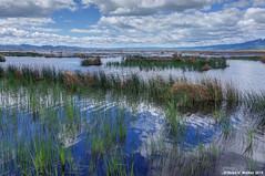 Flooded Refuge (walkerross42) Tags: bearlakenationalwildliferefuge wildliferefuge refuge flood pond idaho landscape