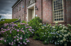 Snowball Bushes at the Lincoln County Courthouse (donnieking1811) Tags: tennessee fayetteville lincolncounty courthouse brick bricks architecture building exterior windows snowballbushes flowers hdr canon 60d lightroom photomatixpro