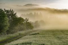 morning steam (Woewwesch) Tags: morning walk morningwalk sony sonyalpha ilce6000 mist sunrise wet hills pastures pat interesting misty clouds fog sun outdoors landscape