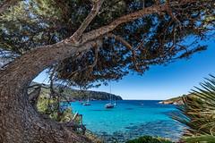 Mallorca - Sant Elm - 0664 (Peter Goll thx for +12.000.000 views) Tags: mallorca santelm 2019 spanien urlaub balearischeinseln spain mittelmeer sea tree baum nature natur mediterraneansea mediterran baleares balearen meer