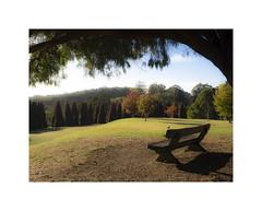 Outlook from a wooden seat ... (jen 3163) Tags: rjhamerarboretum dandenongs dandenongranges trees bench seat lawn autumn fall