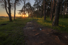 hello summer, my old friend (Sergey S Ponomarev) Tags: sergeysponomarev canon eos 70d ef1018mmf4556isstm landscape paysage paesaggio landschaft hdr highdynamicrange hoyafilters nd8 summer forest woods sunnrise russia russie russland kirov vyatka north europe pinetrees branches sun wet fog mist fileds grass сергейпономарев природа лес рассвет утро киров вятка россия лето июнь европа сосны туман пейзаж simonandgarfunkel tribute path road roots