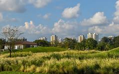 Grasslands (Robert-Ang) Tags: grasslands juronglakegardens singapore clouds grass