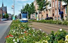 BloemPotterstraat (Peter ( phonepics only) Eijkman) Tags: amsterdam city combino gvb tram transport trams tramtracks trolley rail rails strassenbahn streetcars nederland netherlands nederlandse noordholland holland