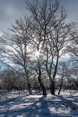 The light of winters past (Through_Urizen) Tags: category eskisehir kanlikavakpark landscape places snow turkey sigma1020mm canon70d canon outdoor winter trees sun sunstar clouds sky tree shadows light lightandshadow nature natural park citypark landscapephotography travelphotography