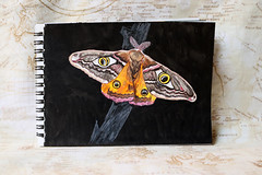 Photo of the day: 10.6.2019 (day 161) (House Of Secrets Incorporated) Tags: art painting watercolour watercolor aquarelle aquarel moth insect insects emperormoth mixedmedia colouringpencils derwent kuretake brushpen photooftheday photooftheday2019 aphotoaday2019 dailyphoto dailyphoto2019 dailyphotography dailyphotography2019 dailyphotograph blog blogger blogging kittensandsteamblogspotcom instagramkittensandsteam twitterhildebcm belgianblogger instagramcomkittensandsteam