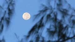 """En 2019 se profetiza: """"Tres raras superlunas consecutivas"""" indica que sucederán las cosas inusuales (marreroperaltatalia) Tags: luna cielo arbol misteriosdelabiblia dios"""