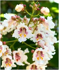 DSCF0154 (DrOpMaN®) Tags: korhankumral fujifilm fujinonxc1650mmf3556ois flowersplants summer xe2