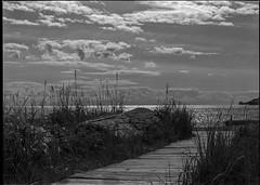 Grass and sky - Film Sinar (Photo Alan) Tags: blackwhite blackandwhite bw monochrome cloud clouds grass sea water waterfront film filmcamera filmscan film120 sinar schneider vancouver canada