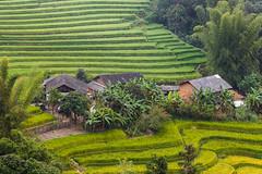 _Y2U7093.0913.Tà Lượt.Thèn Phàng.Xín Mần.Hà Giang (hoanglongphoto) Tags: asia asian vietnam northvietnam northeastvietnam landscape scenery vietnamlandscape vietnamscenery village house homes terraces terracedfields flankshill canon canoneos1dx đôngbắc hàgiang xínmần tàlượt bảnlàng sườnđồi nhữngngôinhà ruộngbậcthang ruộngbậcthangxínmần phongcảnh northernvietnam